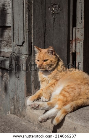 Lazy red cat on sunny summer day. Selective focus. - stock photo