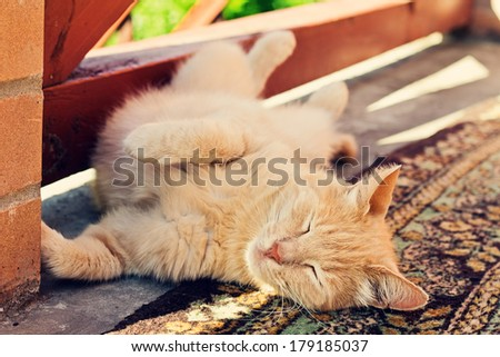 Lazy red cat stretches on carpet at outdoors, paws up - stock photo