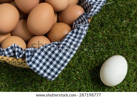 Leadership Concept Illustrating by Eggs - stock photo