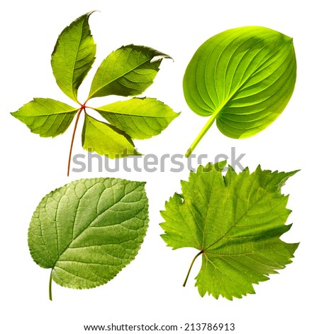 Leaf - stock photo