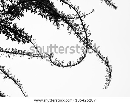 leaf abstract with white background - stock photo