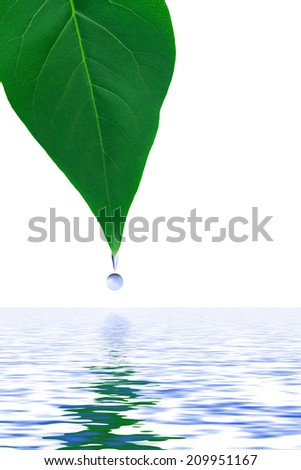 Leaf and water drop isolated on white background - stock photo