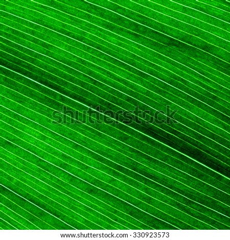 Leaf Close Up./ Leaf Close Up - stock photo