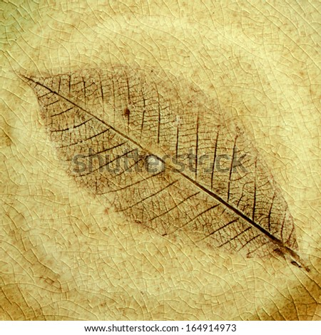 Leaf fossil in the stone. - stock photo