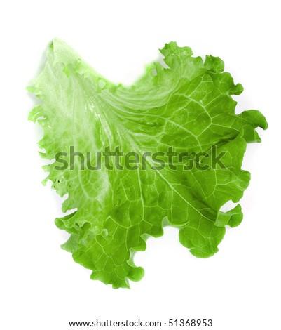 leaf fresh lettuce isolated on white background - stock photo