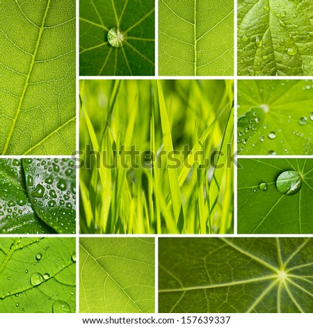 leaf lotus waterdrop leaf veins set collage - stock photo