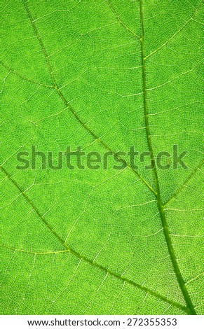 leaf macro shot for desing backgrounds - stock photo