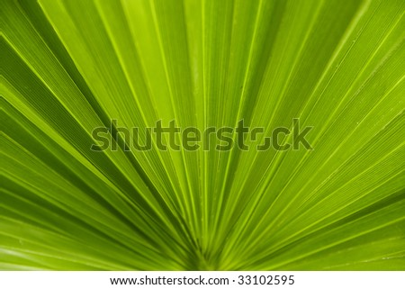 leaf of palm tree on a white background - stock photo