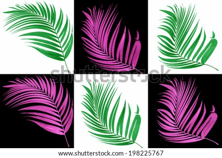 leaf of palm tree on white and black background - stock photo