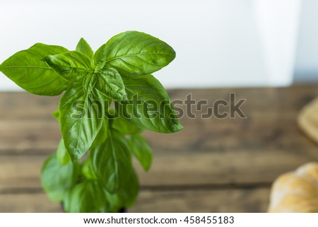 Leaf of the basil - stock photo