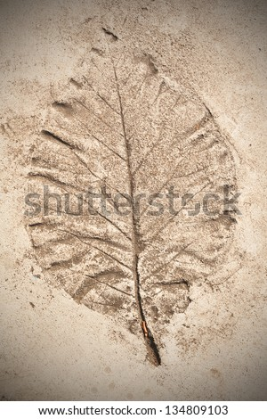 Leaf on cement texture background - stock photo