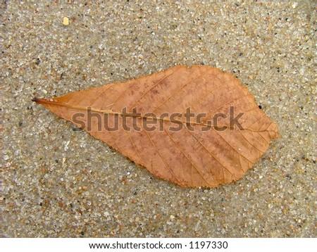 leaf on sand - stock photo