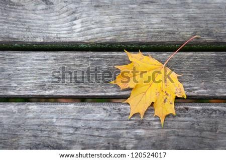 Leaf on the tree planks - stock photo