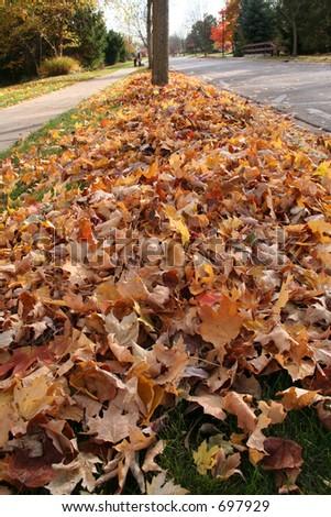 Leaf pick-up - stock photo