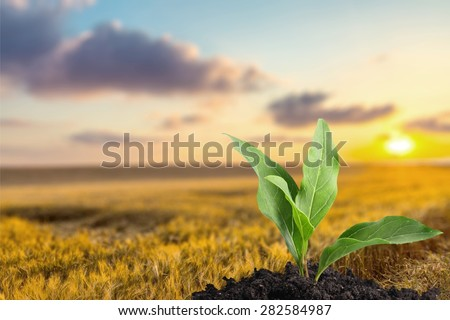 Leaf, Plant, Seed. - stock photo