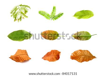 Leaf set isolated on white - stock photo