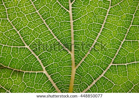Leaf texture abstract background with closeup view on veins - stock photo