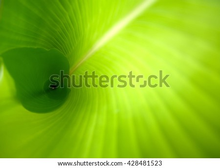 Leaf texture. Green leaf background. Leaves background. Banana Leaf. Green leaves texture background macro. - stock photo