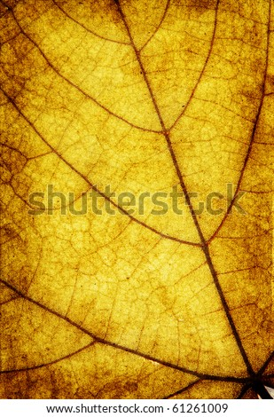 leaf texture grunge style - stock photo