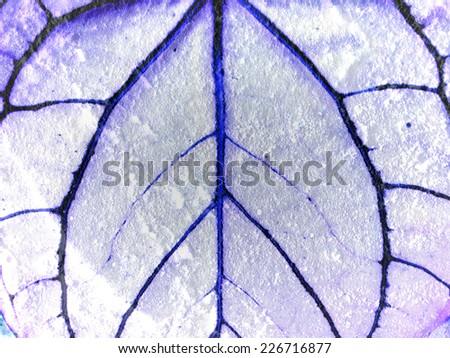 leaf texture  leaves background - stock photo