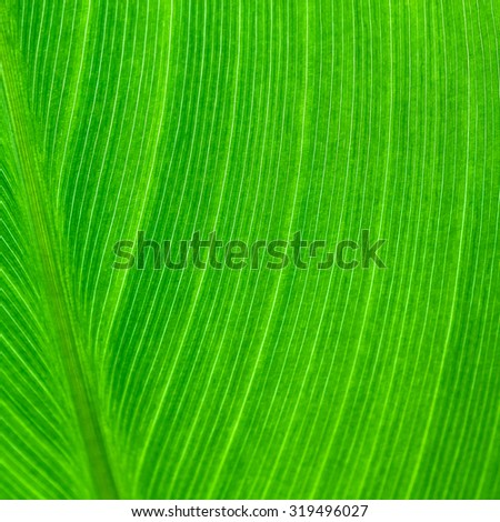 leaf texture nature green background - stock photo