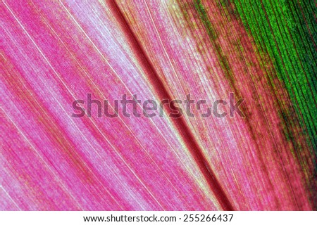 Leaf textures of fresh colors. - stock photo