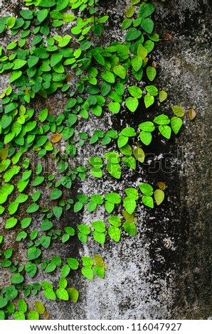 Leaf wall cement - stock photo