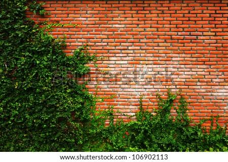 Leaf wall orange brick - stock photo