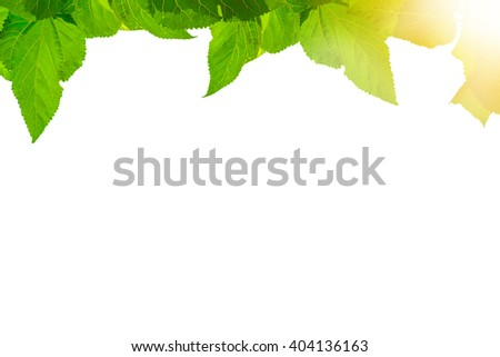Leaf with bright sunlight on white background - stock photo