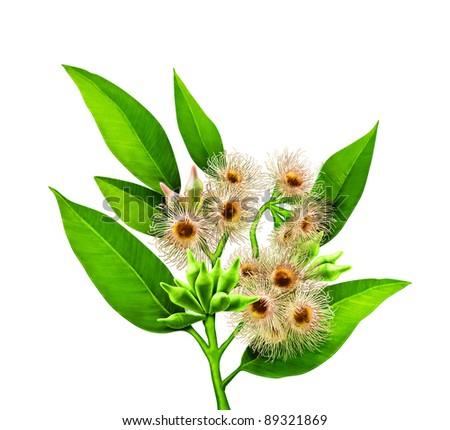 leaf with tiny sun flowers - stock photo