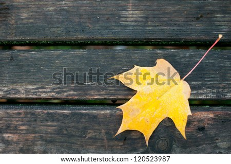 Leaf with water drops on wet boards - stock photo