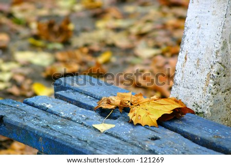 Leafe on a banch - stock photo