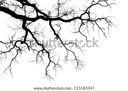 Leafless branches isolated on white background - stock photo