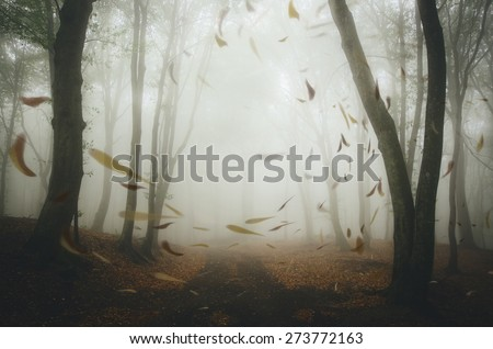leafs blown by wind in misty forest - stock photo