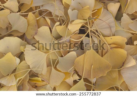 Leafs in autumn, Essone department, France - stock photo