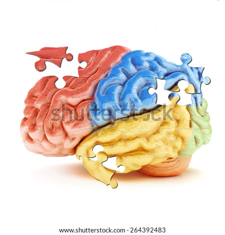 Learning the Brain. Colored sections of the human brain in the form of puzzle pieces. - stock photo