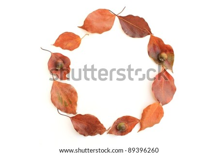 Leasing leaves - stock photo