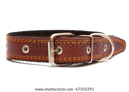 Leather dog collar on a white background - stock photo