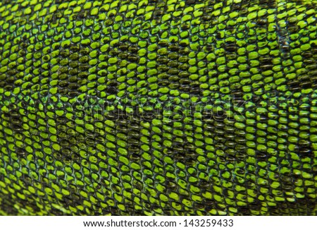 Leather green lizards closeup - stock photo
