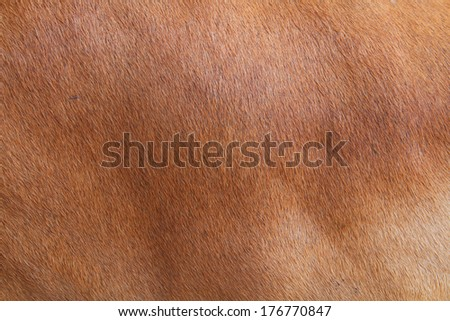 leather of cow - stock photo