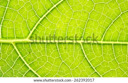 Leave texture. - stock photo