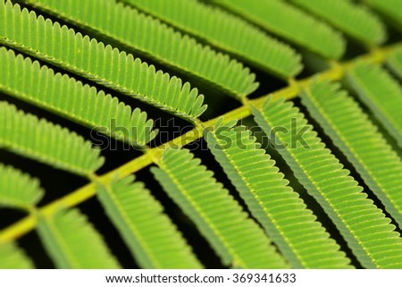 leaves. - stock photo
