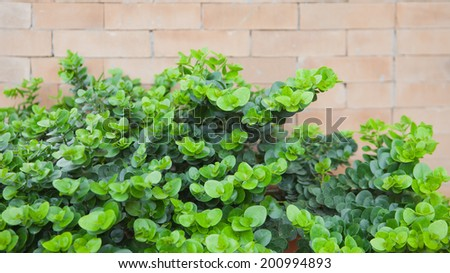 Leaves a small stone wall - stock photo