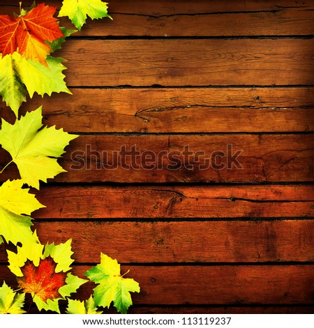 Leaves. Abstract autumn backgrounds for your design - stock photo