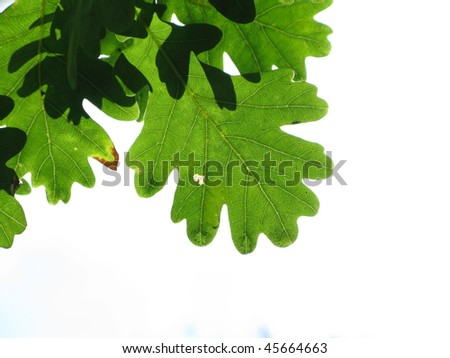 Leaves against the sky - stock photo