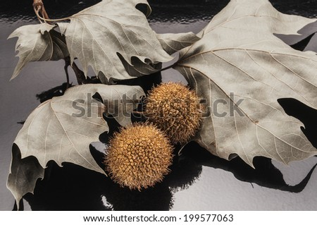 leaves and seeds - stock photo