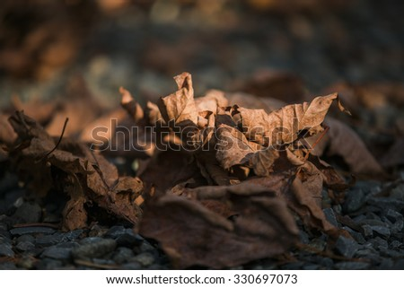 Leaves -change concept  - stock photo