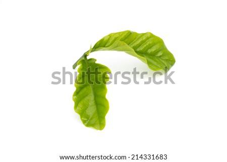 Leaves coffee - stock photo
