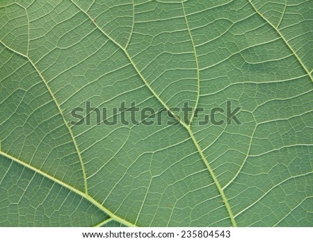 leaves green leaf texture background - stock photo
