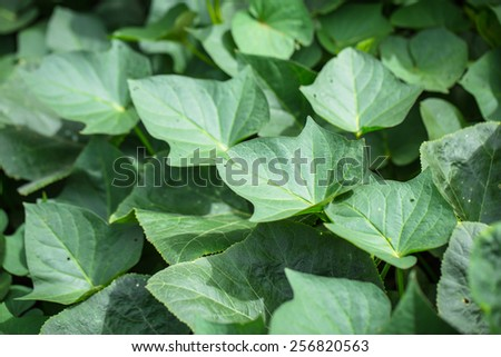 leaves green shot background - stock photo